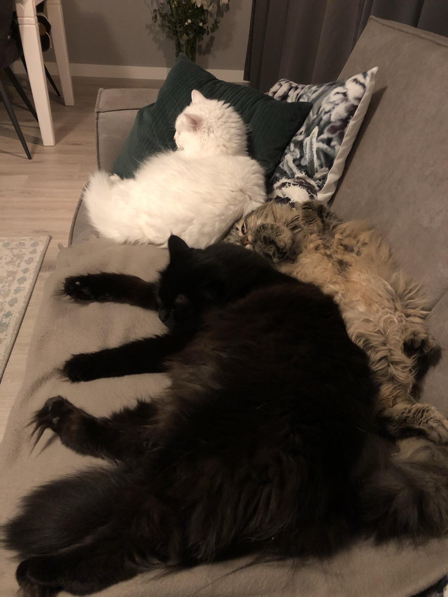 Onze drie Siberen!
