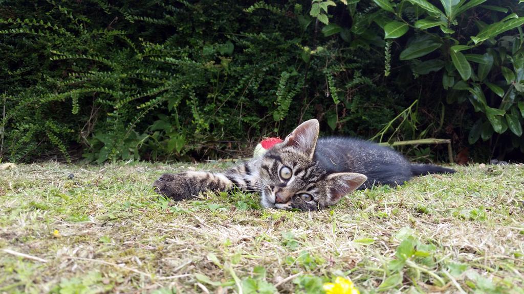 Sid 10 weeks old.